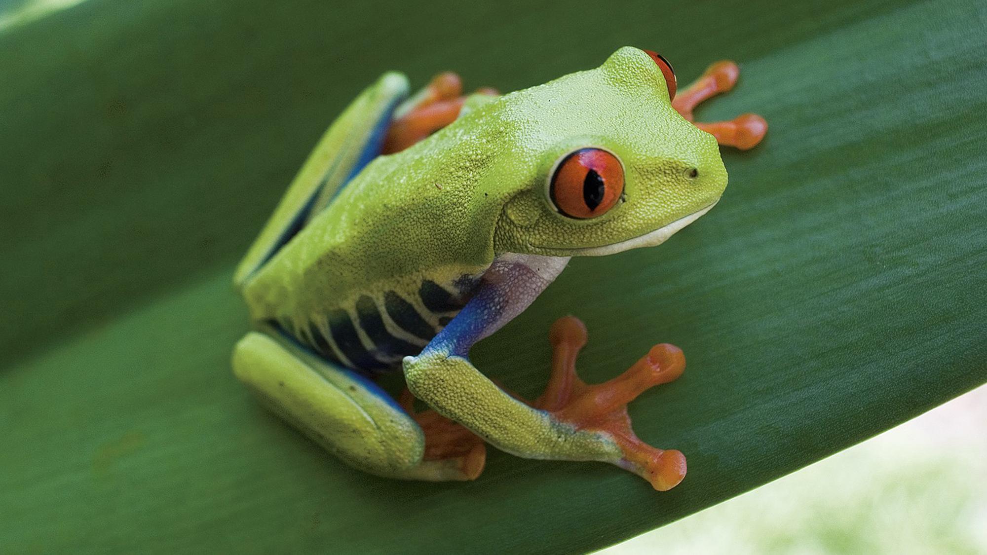treefrog12000x1125